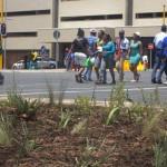 Biodiversity in the urban environment