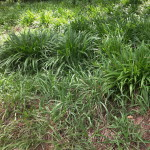 Gardening With Grassland Species Part 3: Shady Garden Spots