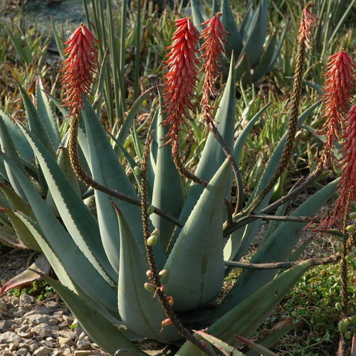The Best Drought Tolerant Plants from the Grassland Biome