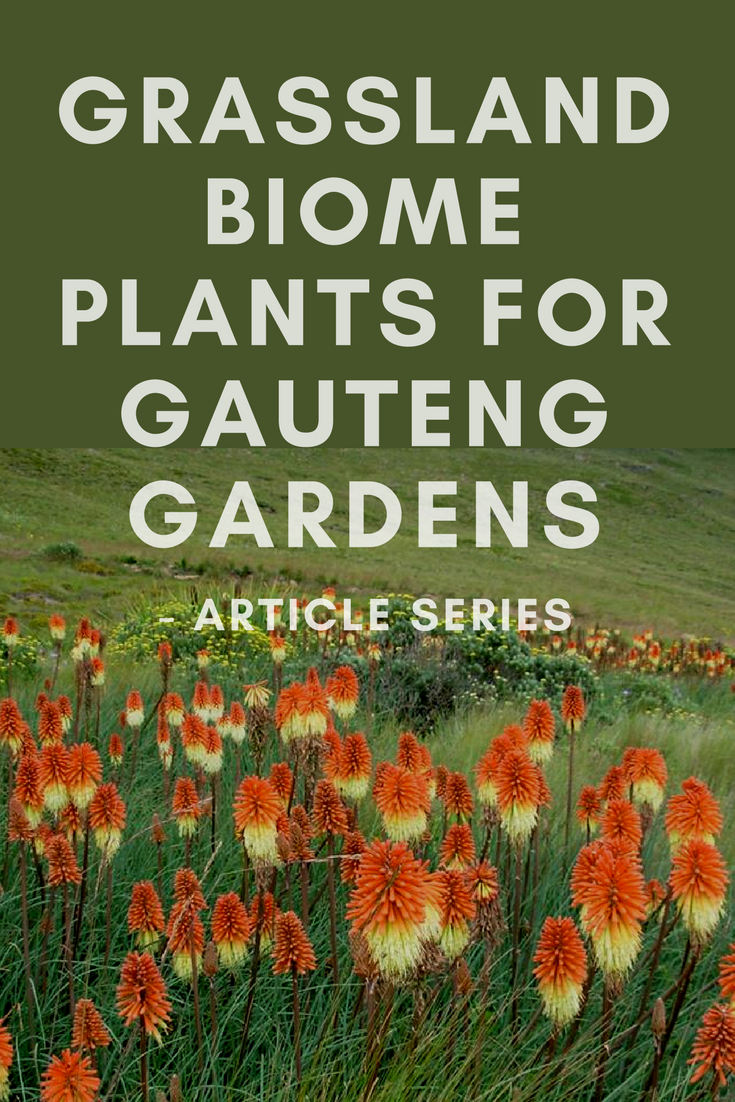 grassland biome plants articles