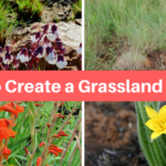 How To Create A Grassland Garden Plant Palette – A Step-by-Step Recipe