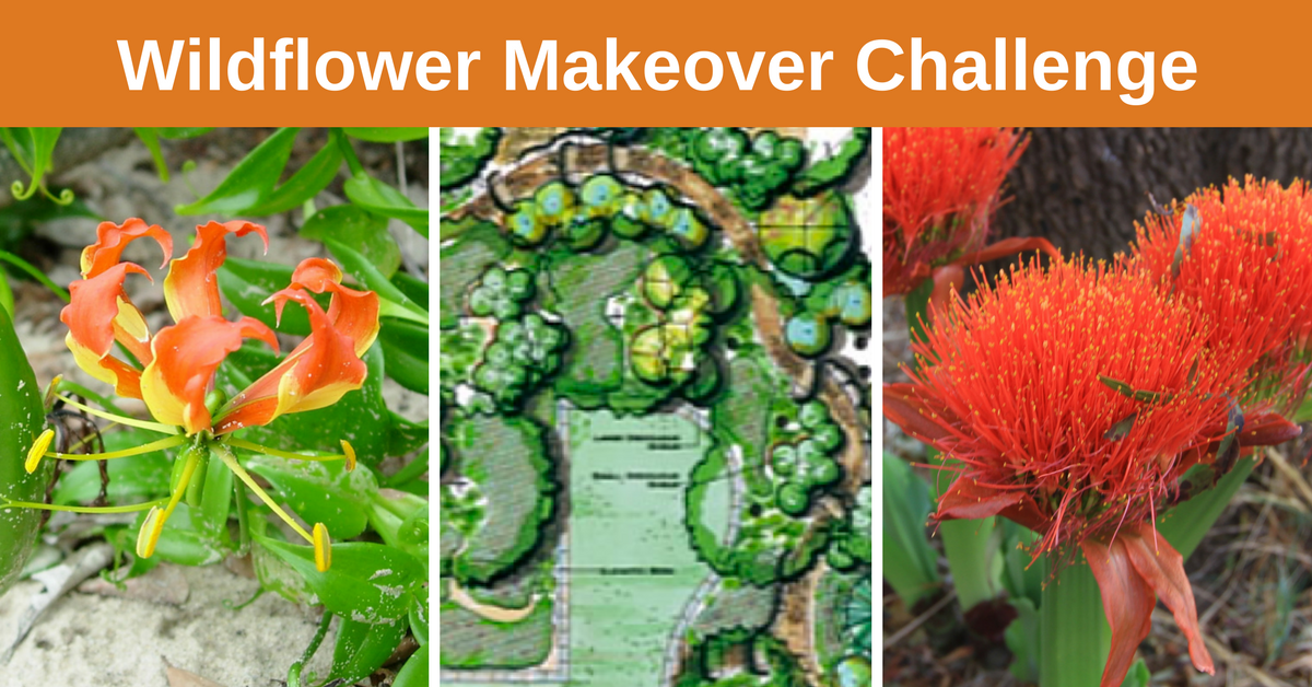 wildflower makeover challenge
