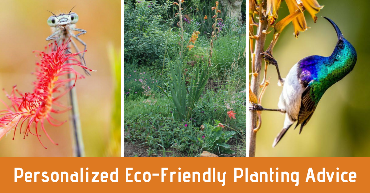 eco friendly planting advice