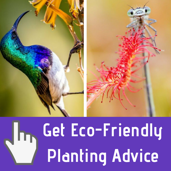 eco-friendly planting advice